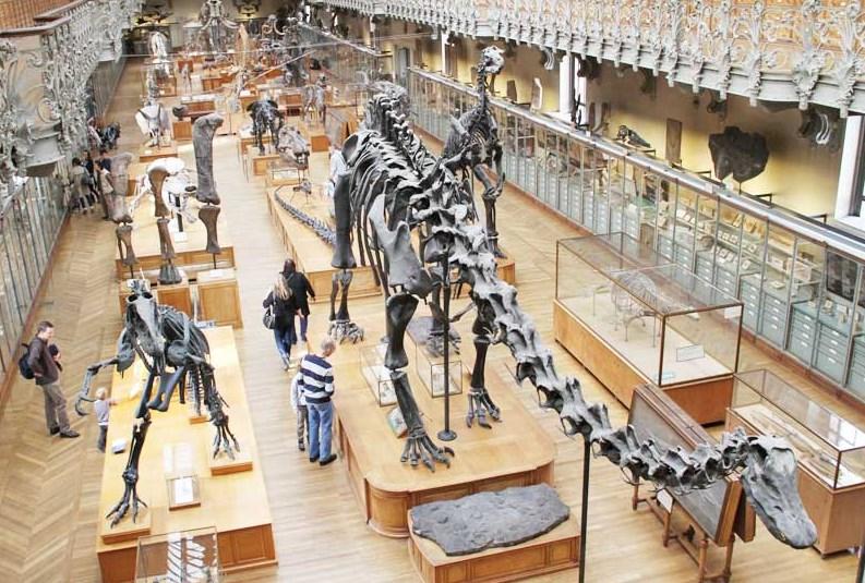 Картинки по запросу Американский музей естественной истории