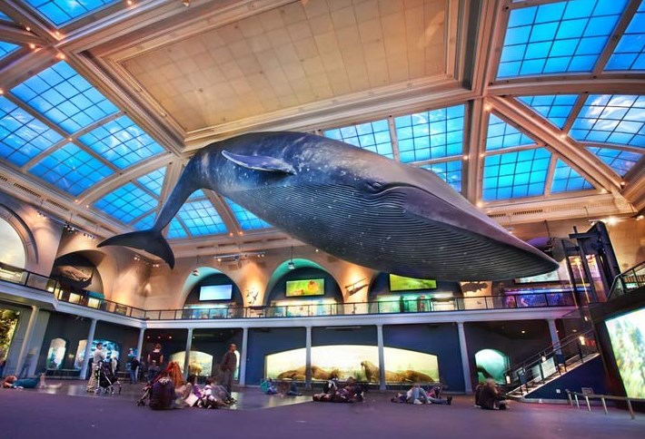 a reflection on visiting the hall of biodiversity birds of the world and dinosaur halls at the museu